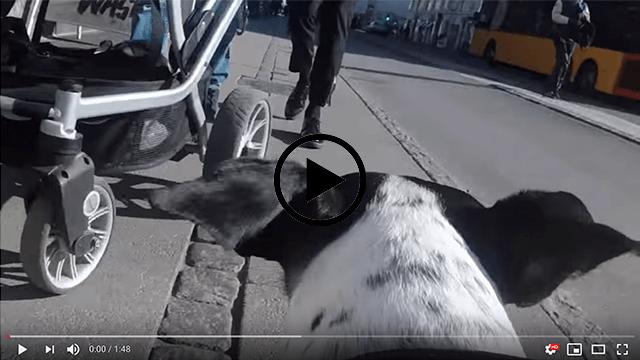 Nørrebro set med en hunds øjne